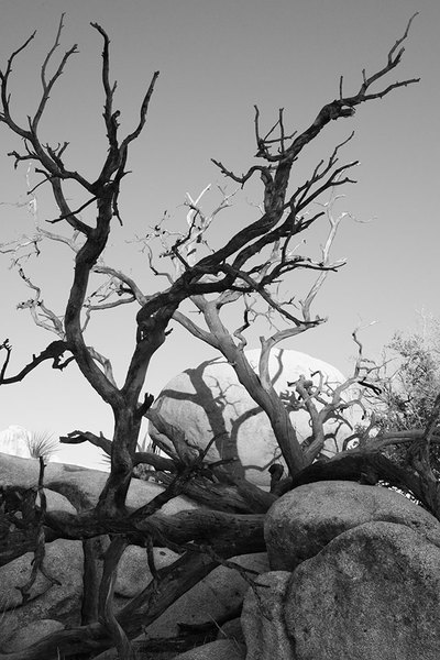 BARBED TREE & EGG ROCK